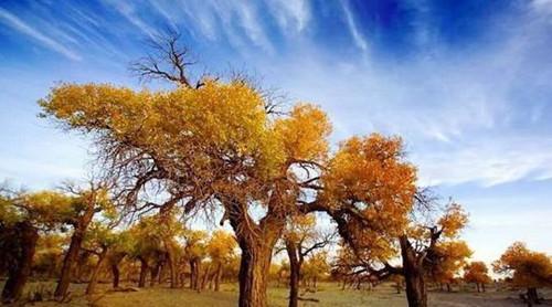 新疆胡杨林旅游线路