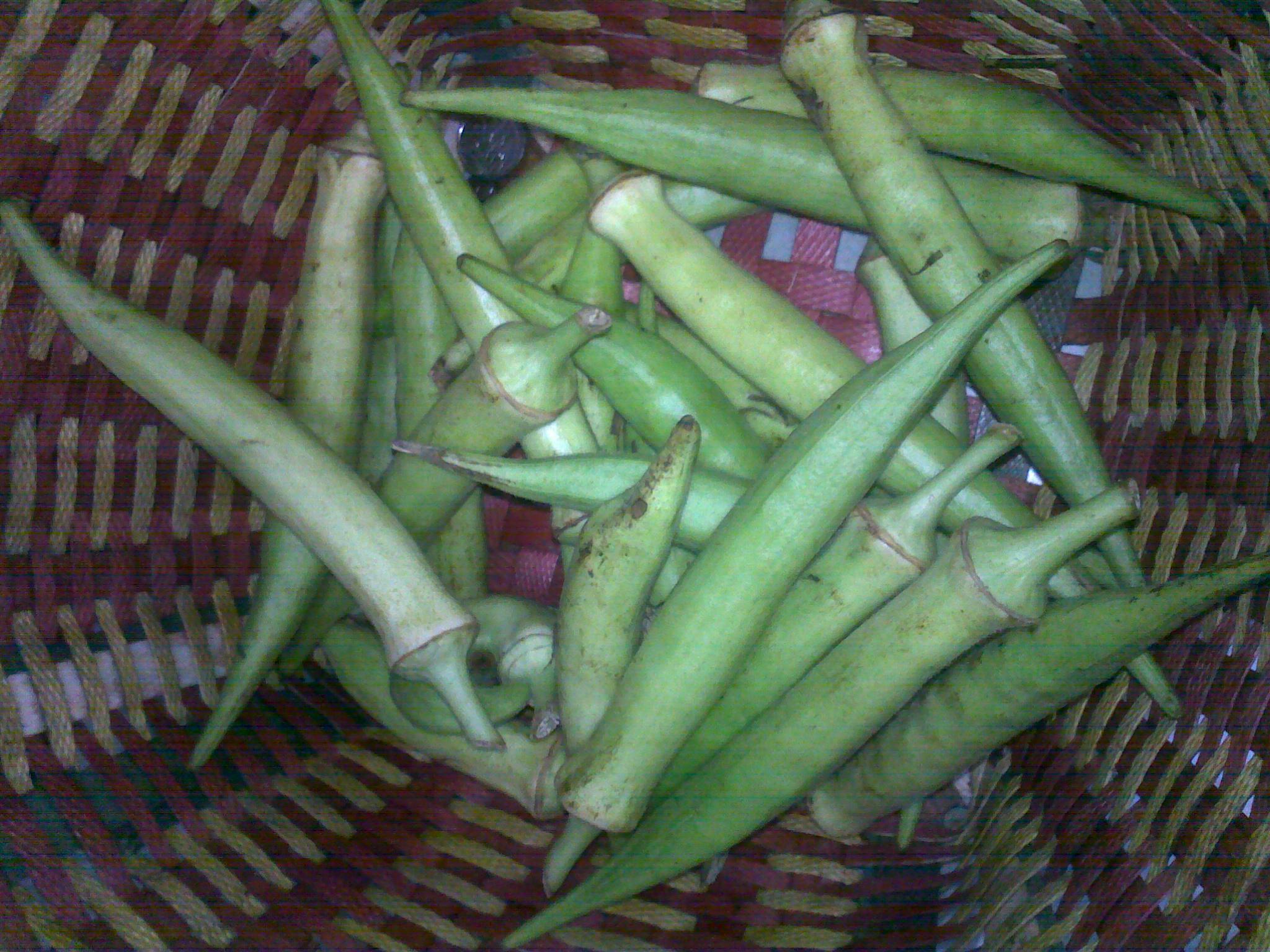 请问有没有一种有机 蔬菜 外形类似青椒的高清图片