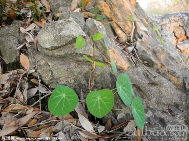 泰国山乌龟怎么养