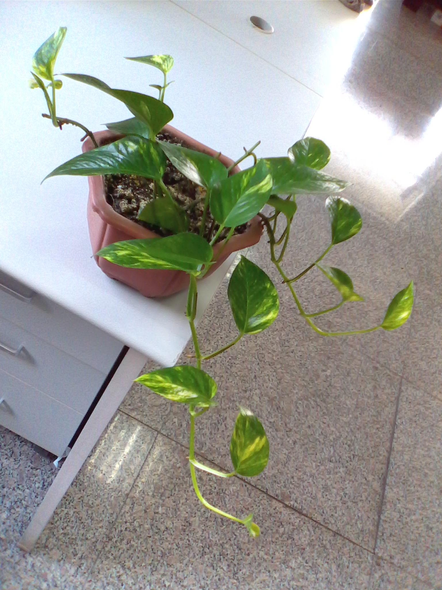 吊兰的品种名称-吊兰的种类 吊兰的种类有哪些 吊兰的种类及图片名称