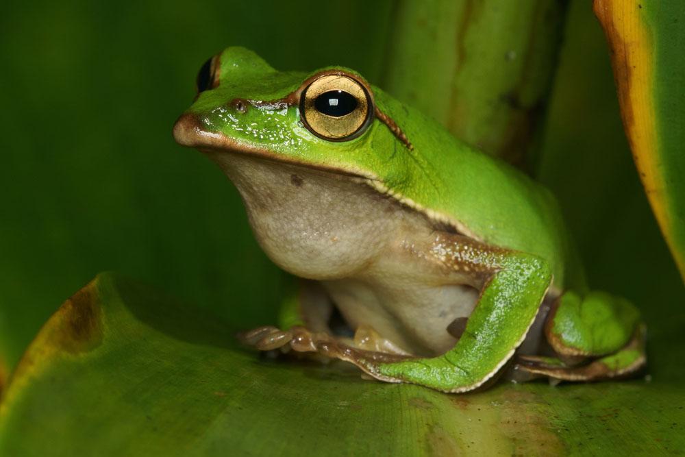 青蛙和蟾蜍好朋友优美词汇