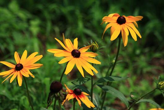 捕蝇草类似的植物