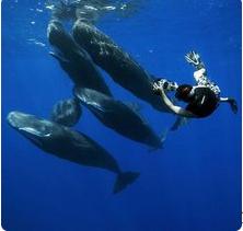 世界上最小的鲸鱼多重
