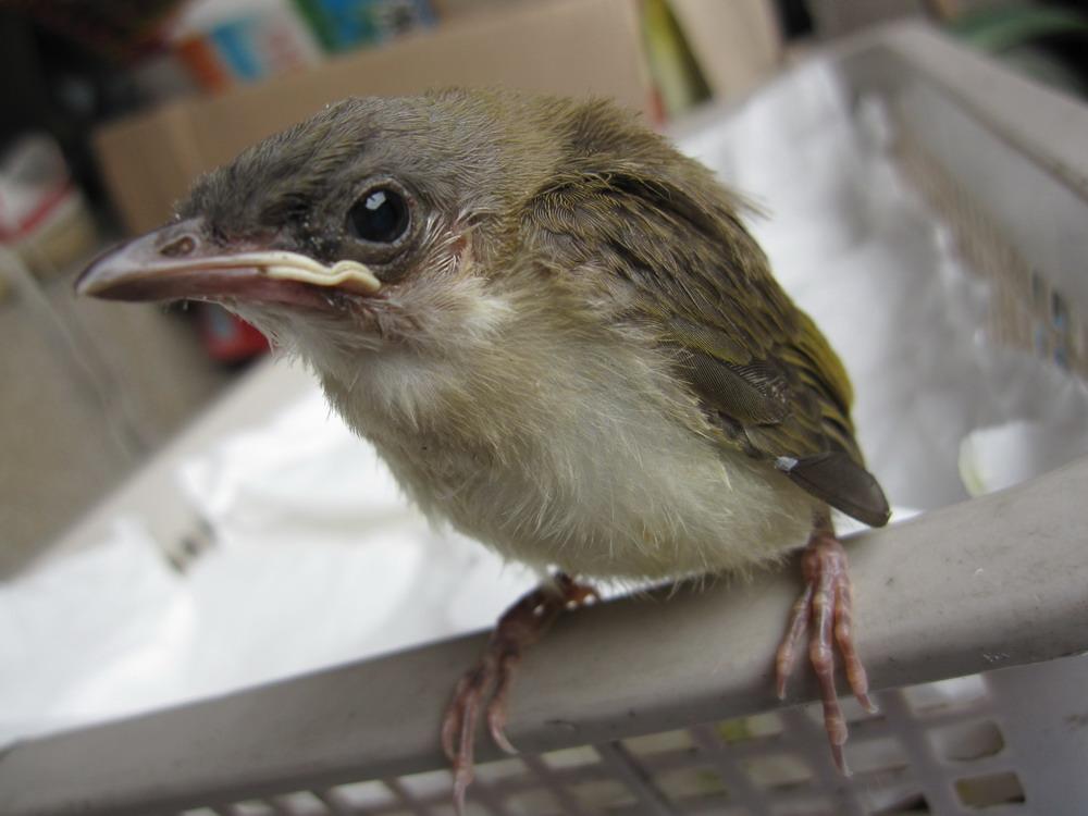 鲁班木鸟会飞原理图 会飞的鸟 会飞的鸟有哪些