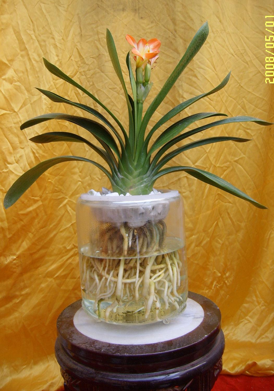 袖珍椰子用什么土栽培