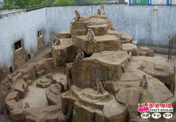 温州景山动物园门票