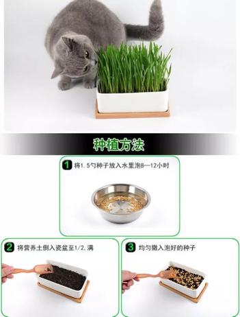 怎么种猫草