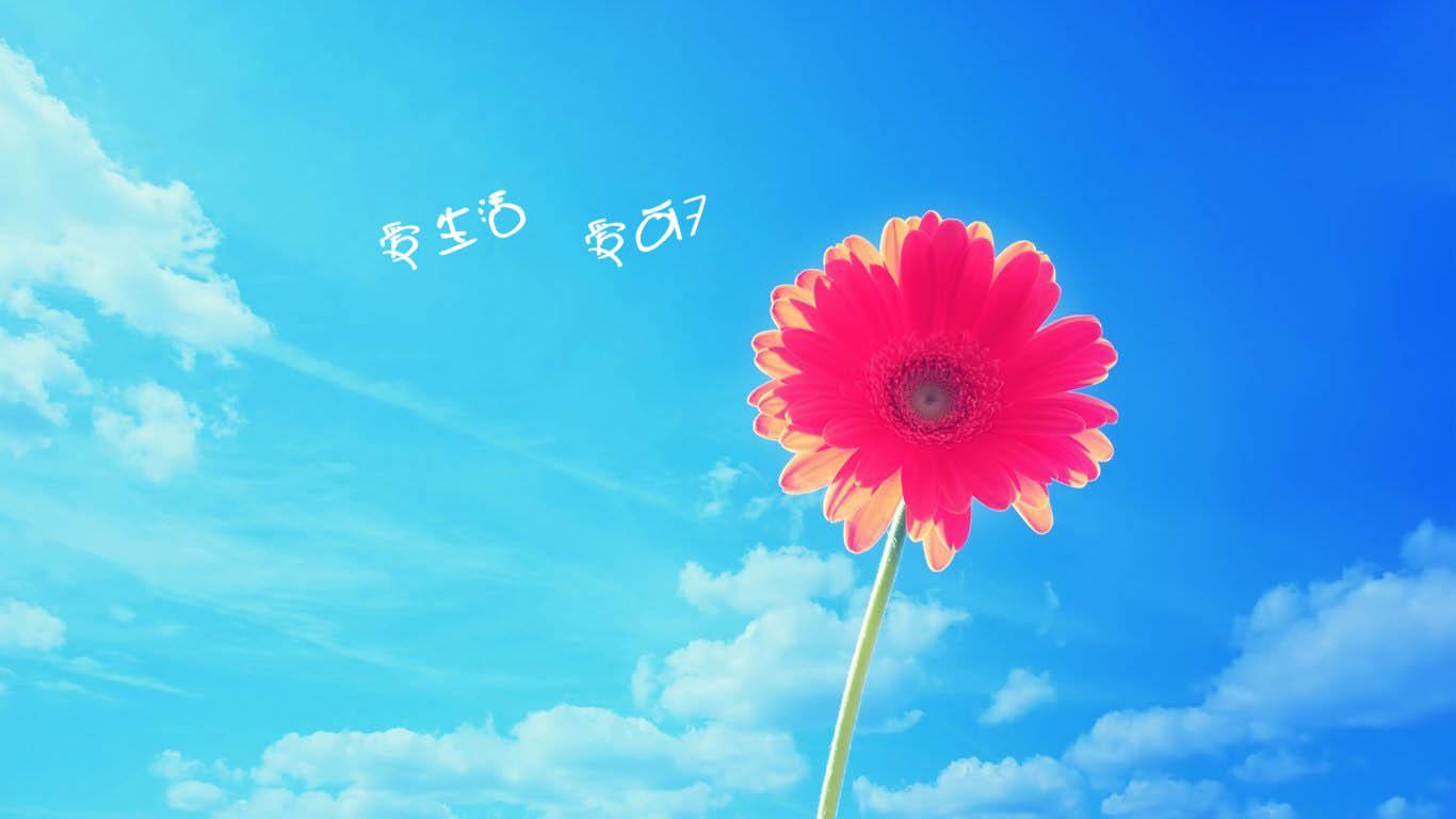 给我一张上面写着 爱生活爱可7 的唯美图片.谢谢