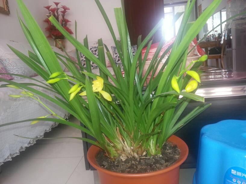 兰花有多少品种?图片