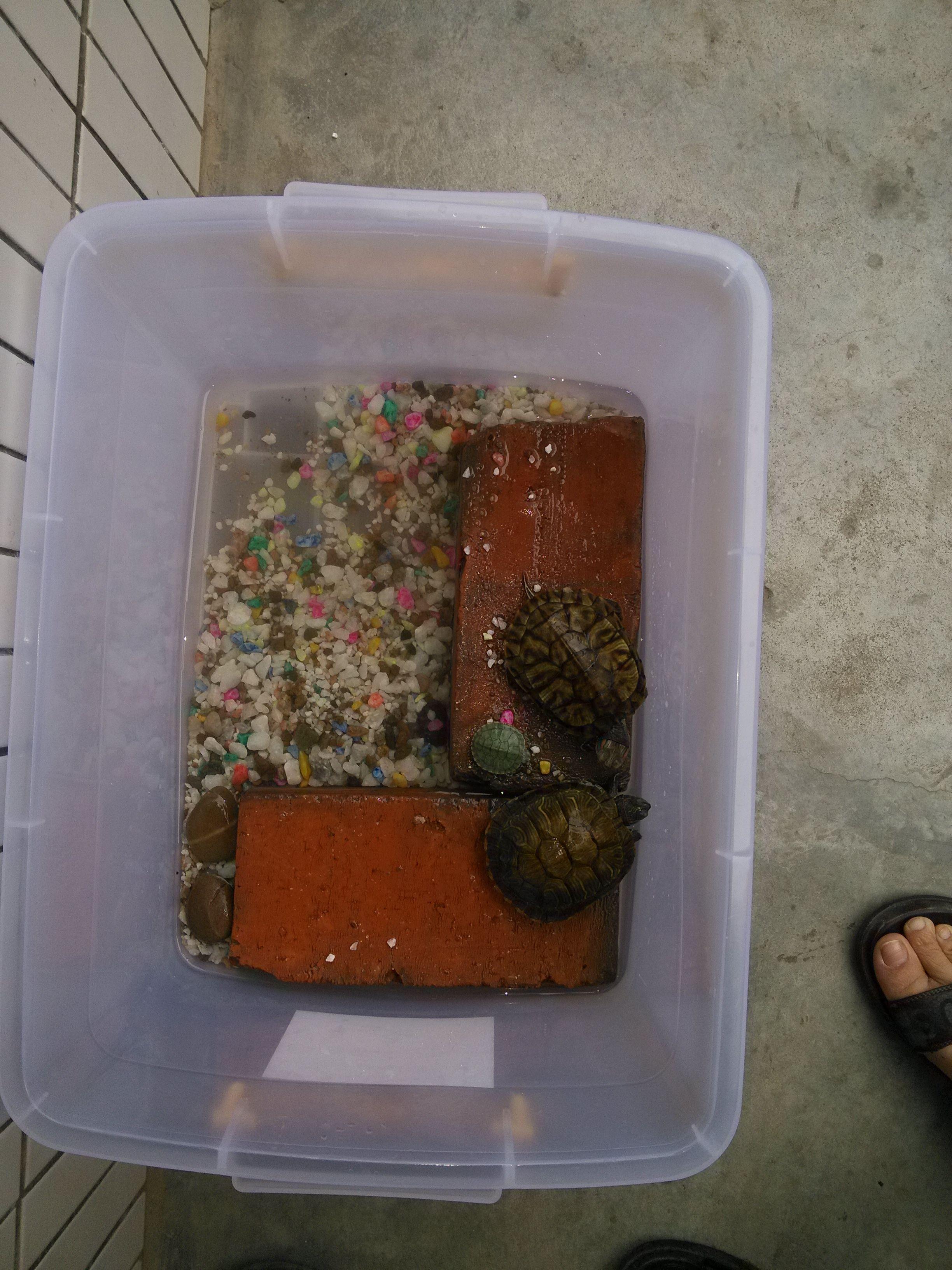乌龟怎么养 乌龟冬眠怎么养 小乌龟怎么养