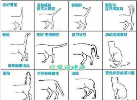 人类猫语怎么说