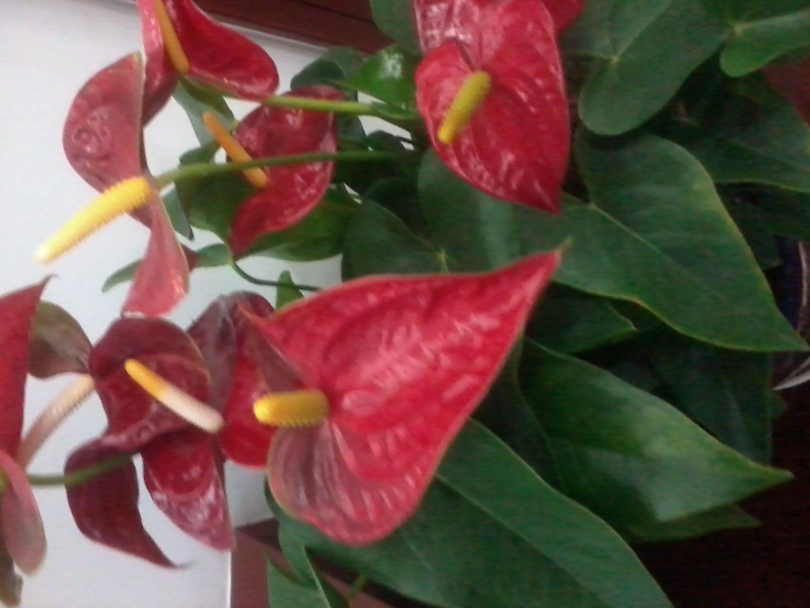南方花卉名称及图片 家养花卉大全及名称 花卉大全名称图解