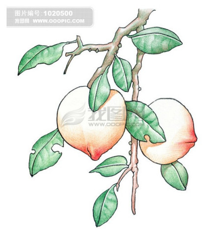 桃子怎么画图片