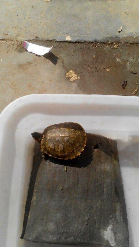 乌龟现在还冬不冬眠