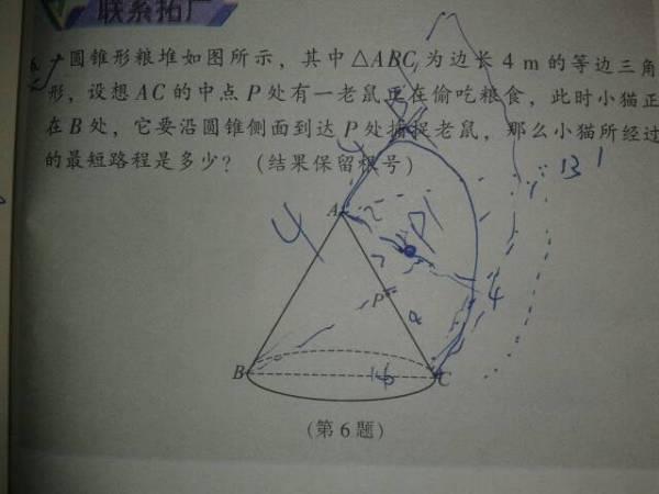 为什么圆锥里面有个等腰三角形,展开后会是半圆