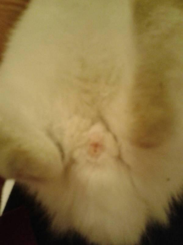 兔子怎么分辨是公母图片
