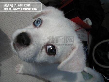 狗身上有白色皮屑
