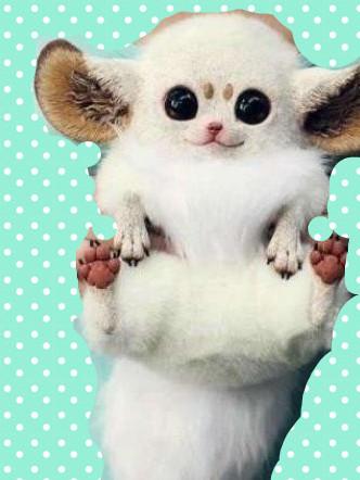 可爱的鼠狐猴_其实还比较像鼠狐猴